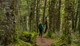 Woman hiker at Kepler track Stock Photo