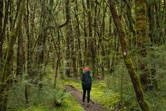 Woman hiker at Kepler track Stock Images