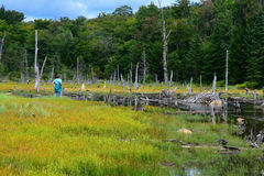 Woman hiker looking at old beaver lodge landscape Royalty Free Stock Images