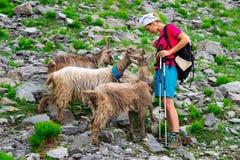 Woman hiker Stock Photos