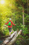Woman hiker with sticks walking in forest. Tourism concept. Woman hiker with sticks walking in forest outdoor. Tourism concept Royalty Free Stock Image