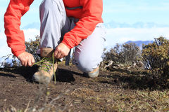Woman hiker tying shoelace of hiking boots on mountain peak Stock Images