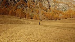 Woman hiker walking on fall fields path near trees.Side view. Sunny autumn day Hiking in colorful red forest wild nature. Mountain outdoors.Alps Devero lake stock video footage