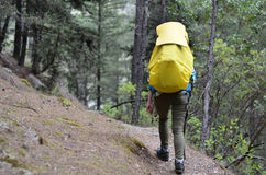 Woman hiker walking in forest. Woman backpacker walking in mountains forest Stock Images