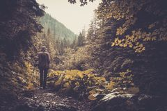 Woman hiker walking in a forest Royalty Free Stock Images