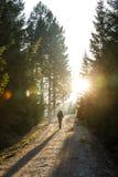 Woman hiker walking on a mountain road, sun shining Stock Images