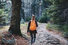 Woman hiker walking on the trail in the woods. Back view. stock photography