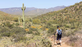 A Woman Hikes the Go John Trail, Arizona Royalty Free Stock Images