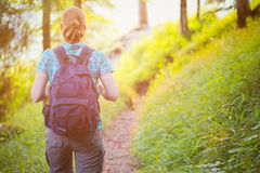 Woman Hiking in Alpine Forest stock image