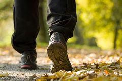 Woman hiking in autumn forest Stock Image