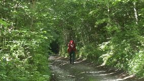 Woman hiking with backpack in green forest stock footage