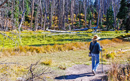Woman Hiking in Cedar Breaks National Monument Royalty Free Stock Image