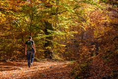 Woman hiking in colorful autumn forest in Dardha, Albania royalty free stock photos