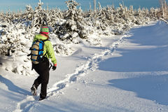 Woman hiking with dog in winter mountains. Woman hiking on snow in winter mountains Stock Photo