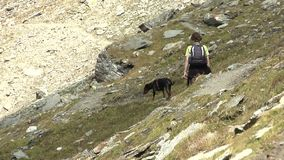 Woman hiking with dog. Young woman with German Pinscher dog hiking through alpine Teischnitz valley in the Hohe Tauern region below the Grossglockner, Austria stock video