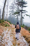 Woman hiking in the forest Stock Photography