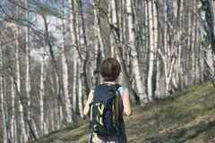 Woman hiking in the forest, one person walking in woodland, backpacking summer adventure travel, rear view, toned image.  Stock Image