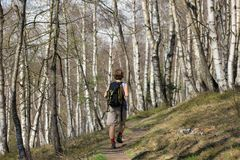 Woman hiking in the forest, one person walking in woodland, backpacking summer adventure travel, rear view, toned image.  Stock Photo