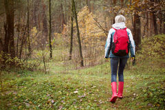 Woman hiking in forest during rainy autumn season Royalty Free Stock Image
