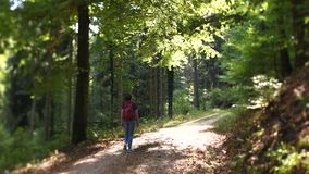 Woman hiking German forest tilt-shift lens. Woman walking in German forest hiking walking under illuminated tree- shallow focus following the subject with a tilt stock video
