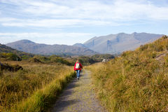 Woman on hiking in Killarney national park. Woman on hiking trail in Killarney national park Royalty Free Stock Image