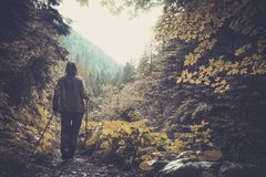 Woman hiking in mountain forest Stock Image