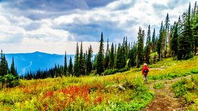 Woman hiking on Tod Mountain near the village of Sun Peaks in BC Canada. Senior Woman hiking through the alpine meadows in fall colors under cloudy sky on Tod stock photography