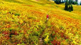 Woman hiking on Tod Mountain near the village of Sun Peaks in BC Canada. Senior Woman hiking through the alpine meadows in fall colors under cloudy sky on Tod stock image