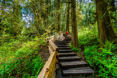 Woman hiking up stairs through the temperate rain forest of Kanaka Creek Regional Park Stock Photography