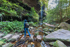 Woman hiking in wilderness of rainforest Stock Photos