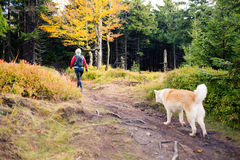 Woman hiking in woods, walking with dog Stock Image