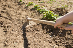 Woman with a hoe in her garden Stock Photo