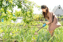 Woman hoeing her vegetable garden Royalty Free Stock Image