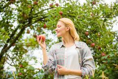 Woman hold apple garden background. Farm produce organic natural product. Girl rustic style gather harvest garden autumn royalty free stock photos