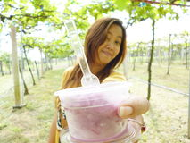 Woman hold a cup of grape ice cream Royalty Free Stock Image