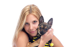 Woman hold in hands small Chihuahua dog Stock Photography