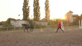 Woman hold horse on leash while running in circle. Coach teaches the horse to run with a whip and a long rope in the arena at the racetrack. Slow motion stock footage