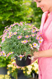 Woman hold potted daisy flower garden centre Stock Photos