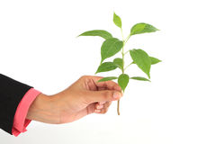 Woman holding baby plant Stock Photos