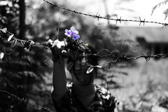 Woman holding barb wire and flower in hand. abuse concept Stock Photo