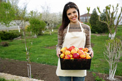 Woman holding basket with apples Stock Image