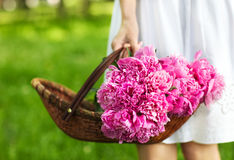 Woman holding basket of peony in her hand Royalty Free Stock Photography