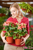 Woman holding begonia flowers in garden center Royalty Free Stock Image