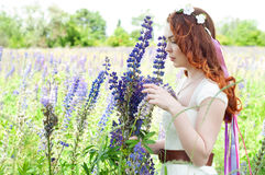 Woman holding a bouquet of field lupine flowers Royalty Free Stock Images