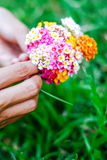 Woman holding a bouquet of latana flowers in her hands. Summer wild flowers Royalty Free Stock Photo