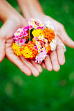 Woman holding a bouquet of latana flowers in her hands. Summer wild flowers Royalty Free Stock Photography