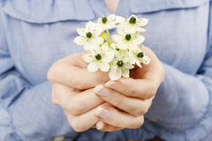 Woman holding bouquet of tiny white flowers (ornithogalum arabic Stock Photography