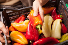 Woman holding box full of peppers Stock Image