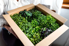 Woman holding box of greens Royalty Free Stock Images