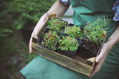 Woman holding a box with plants in her hands in garden center Stock Photos